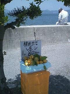 s-採れたてレモン.jpg