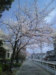 s-桜.jpg
