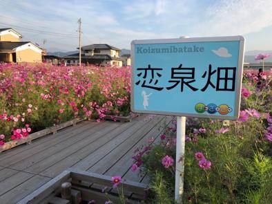 恋泉畑.jpg