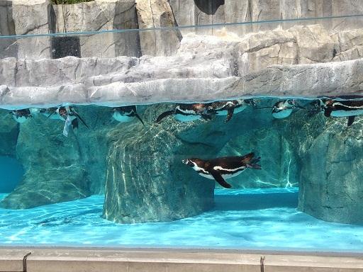 ペンギン02.jpg