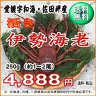愛媛産 『 天然 活き 伊勢海老 250g 』 【送料無料】