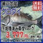 瀬戸内産 【 クロダイ/黒鯛 】 宇和海の幸問屋 送料無料