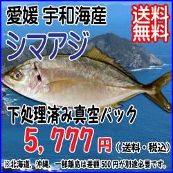 2015-01shimaaji.jpg