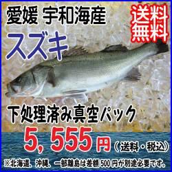 2015-01suzuki.jpg
