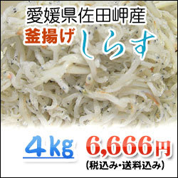 4kg-shirasu.jpg