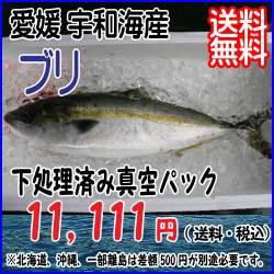 buri-uwakai.jpg