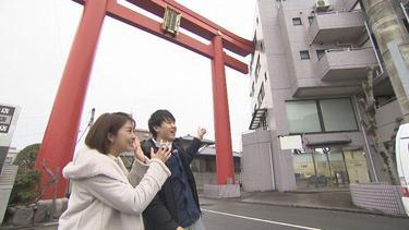 伊予路に春を呼ぶ!<br>椿祭り直前!!「椿参道」よりマチ!